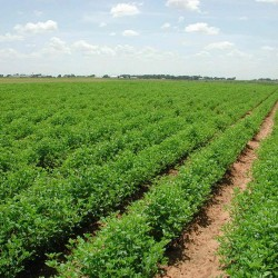 Image provided by: http://deshamar.wordpress.com/2011/05/20/bangladesh-going-to-expand-the-agricultural-farming-industry-in-tanzania/